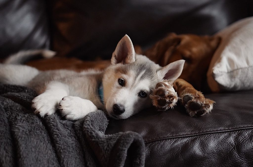 3 Keys to Loving Your New Puppy
