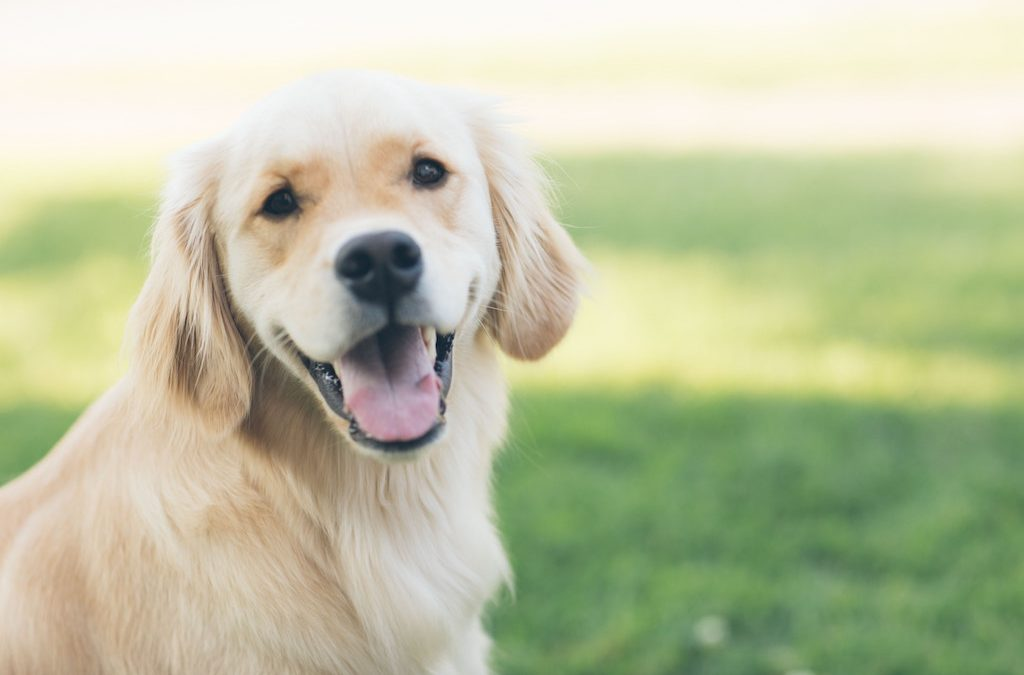 Discovering Allergy Friendly Dog Food For Your Dog