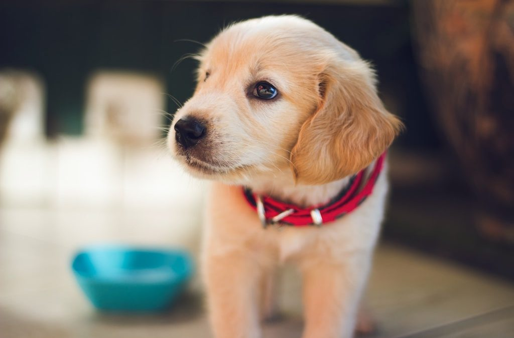 All Creatures Veterinary Center – Easing Your Dog Out Of Lockdown