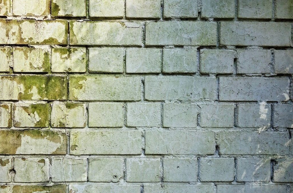 Ways To Keep Your Home Free Of Damp And Mould